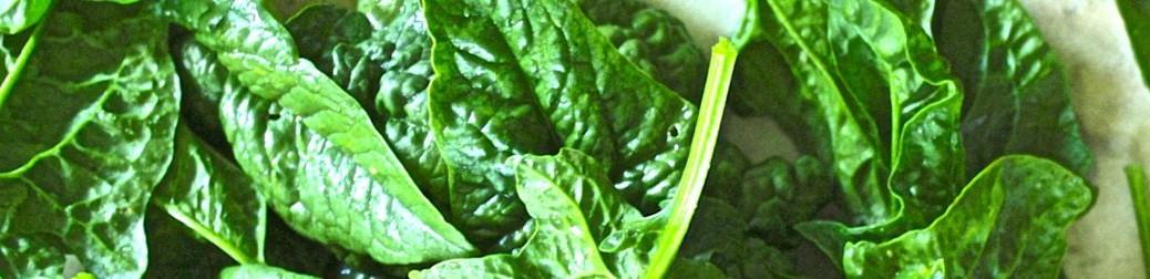 spinach banner